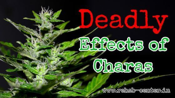Deadly Effects of Charas Cannabis
